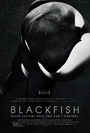 Czarna ryba