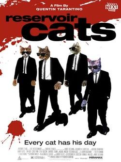 : Wściekłe Koty