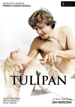 : Tulipan