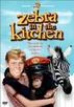 : Zebra w kuchni