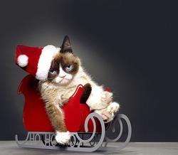 : Grumpy Cat's Worst Christmas Ever
