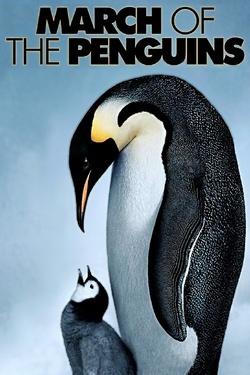 : Marsz pingwinów