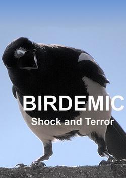 : Ptakodemia