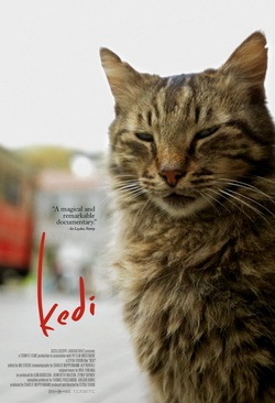 : Kedi - sekretne życie kotów