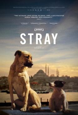 : Stray