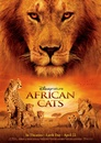 Afrykańskie koty