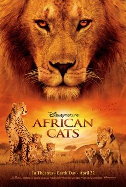 : Afrykańskie koty