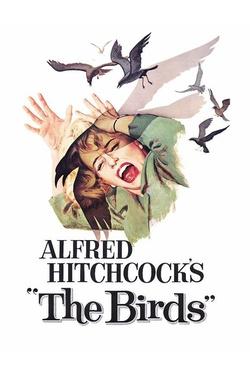 : Ptaki